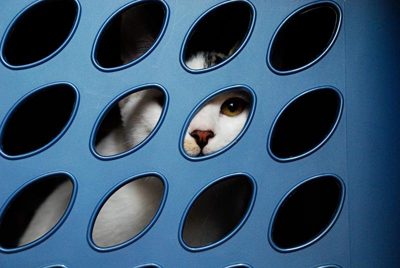 laundrycat.jpg
